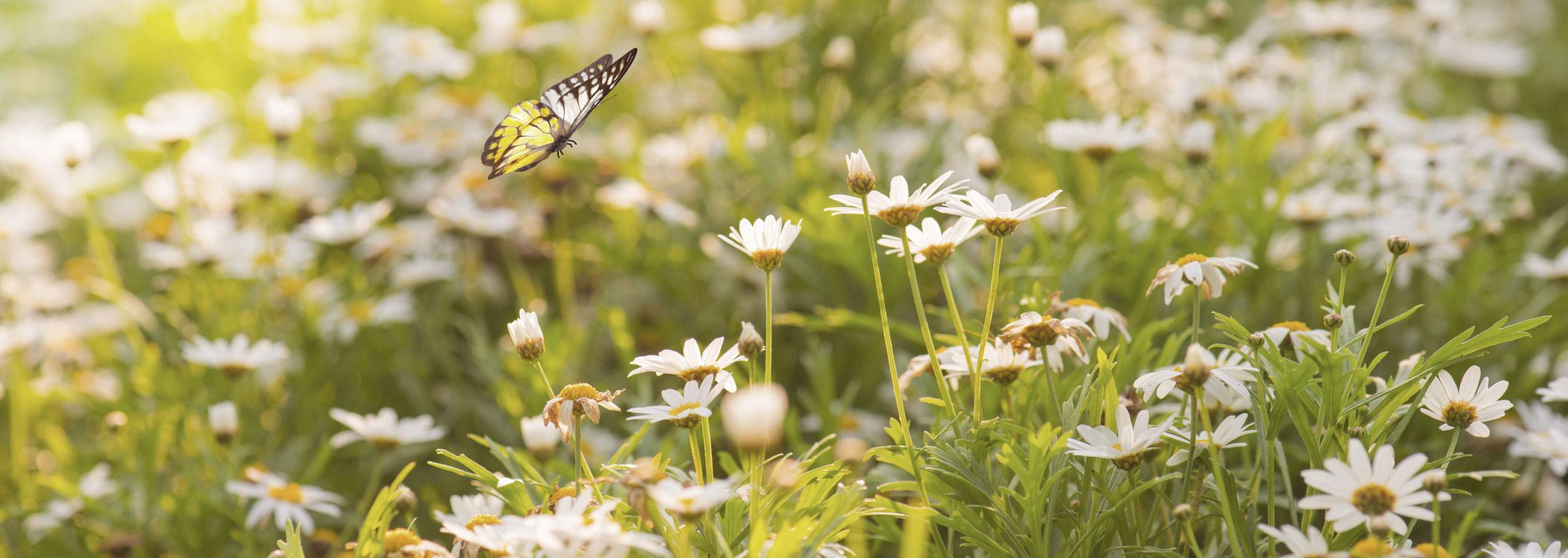 Blommor #trädgårdsblogg
